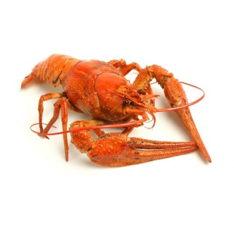 Crayfish River big, 1kg photo