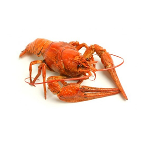 Crayfish river middle, 1kg
